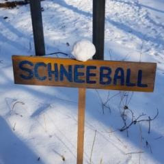 Schneeball: Jogi Herrmann